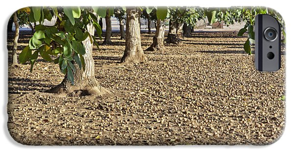 Recently Sold -  - Agriculture iPhone Cases - Fallen English Walnuts iPhone Case by Inga Spence