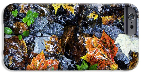 Rainy Day iPhone Cases - Fallen Leaves on a Rainy Day iPhone Case by Thomas R Fletcher
