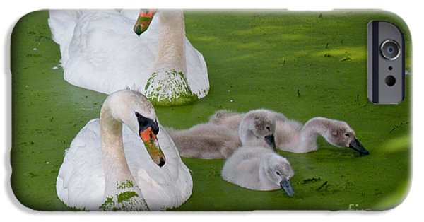 Recently Sold -  - Alga iPhone Cases - Family Time iPhone Case by Cathy Fitzgerald