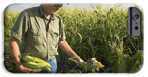 Sweet Corn iPhone Cases - Farmer Inspecting Sweet Corn iPhone Case by Inga Spence
