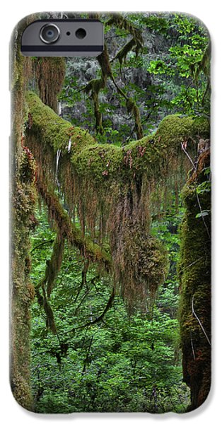 Tendrils iPhone Cases - Fascinating Hoh Valley - Hoh Rain Forest Olympic National Park ONP WA USA iPhone Case by Christine Till