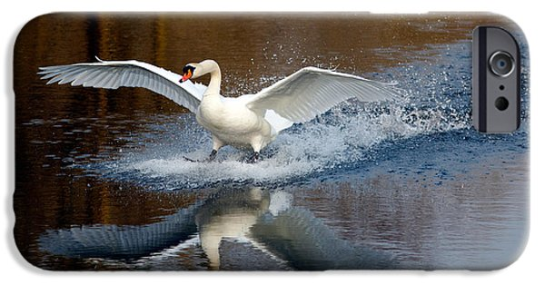 Swans... Photographs iPhone Cases - Fasten Your Seatbelts iPhone Case by Roeselien Raimond