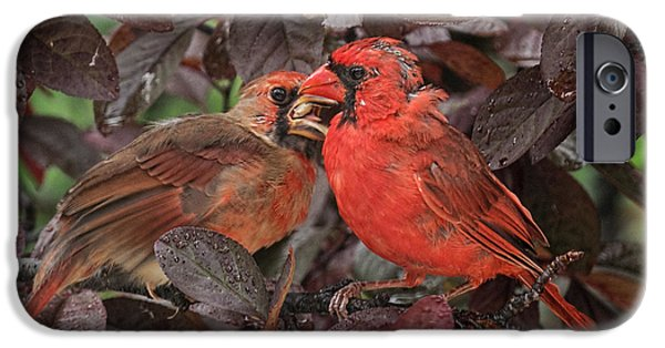Baby Bird iPhone Cases - Father Cardinal iPhone Case by Lara Ellis