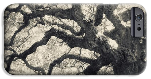 Old Trees iPhone Cases - Father Time iPhone Case by Amy Tyler