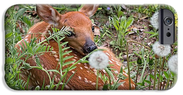 Wild Animals iPhone Cases - Fawn Resting iPhone Case by Barbara McMahon