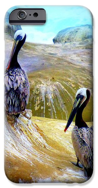 Birds iPhone Cases - Feathered Friends At La Jolla Cove iPhone Case by Lori Seaman
