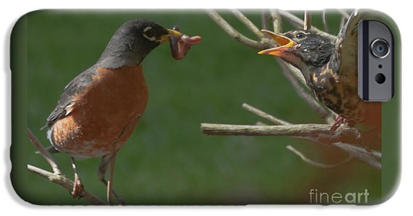 Baby Bird iPhone Cases - Feed me II iPhone Case by Beth Wolff
