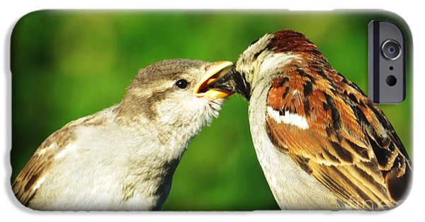 Baby Bird iPhone Cases - Feeding Baby Sparrow 3 iPhone Case by Judy Via-Wolff