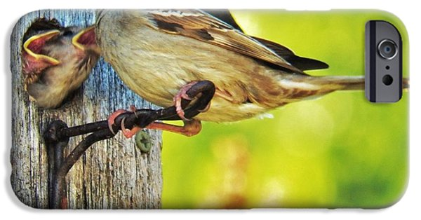 Baby Bird iPhone Cases - Feeding Baby Sparrows 1 iPhone Case by Judy Via-Wolff