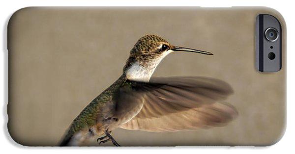 Nature Study iPhone Cases - Female Hummingbird iPhone Case by Janice Rae Pariza