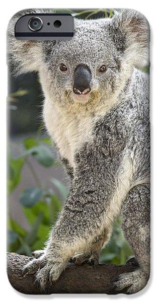 Koala iPhone Cases - Female Koala iPhone Case by Jamie Pham