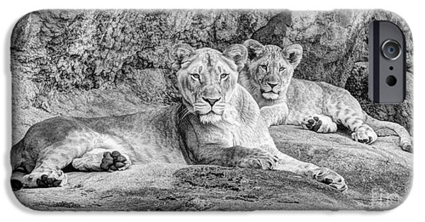 Ledge iPhone Cases - Female Lion and Cub BW iPhone Case by Marv Vandehey