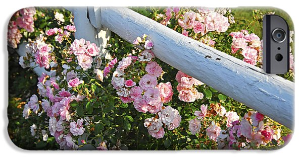 Flora iPhone Cases - Fence with pink roses iPhone Case by Elena Elisseeva
