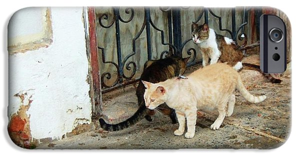 Stray iPhone Cases - Feral Friends iPhone Case by Debbi Granruth