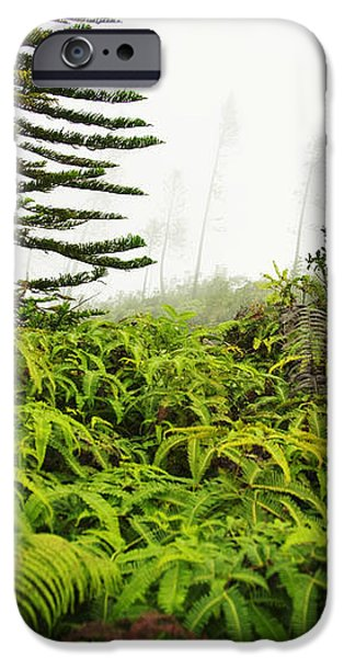 Fern and Norfolk II iPhone Case by Ron Dahlquist - Printscapes