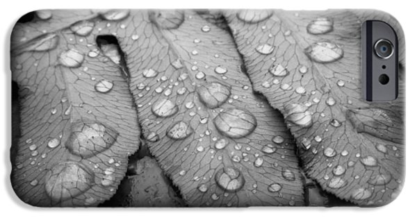 Raining iPhone Cases - Fern Drops in Black and White iPhone Case by Deborah Smith