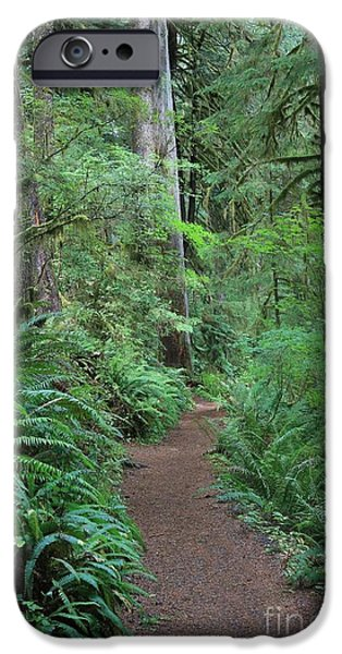 Forest iPhone Cases - Fern Forest Walk iPhone Case by Carol Groenen