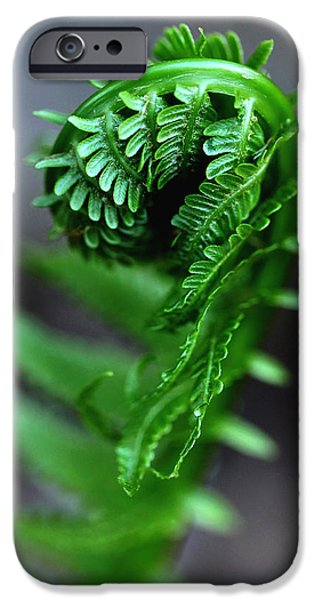Flora iPhone Cases - Fern Frond iPhone Case by Debbie Oppermann
