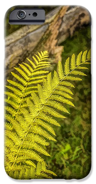 Nature Center Pond iPhone Cases - Ferns on Miller Pond Boardwalk  iPhone Case by LeeAnn McLaneGoetz McLaneGoetzStudioLLCcom