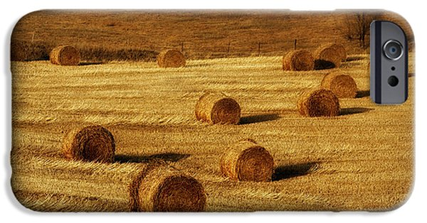 Hayfield iPhone Cases - Field of Gold #1 iPhone Case by Nikolyn McDonald