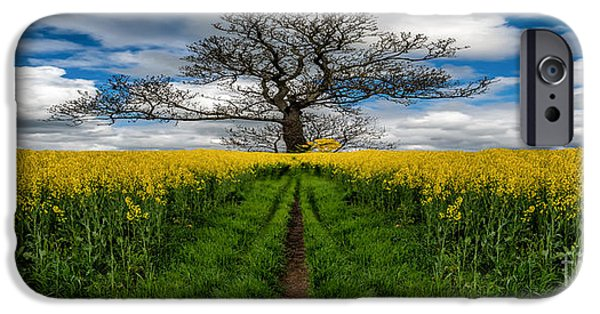 Field. Cloud iPhone Cases - Field Of Rapeseeds iPhone Case by Adrian Evans