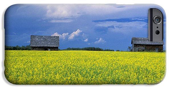Canola Field iPhone Cases - Fields of Yellow iPhone Case by Christian Heeb