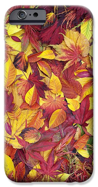 Autumn iPhone Cases - Fiery Foliage iPhone Case by Tim Gainey