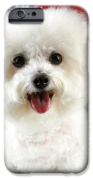 Fifi Loves America iPhone Case by Michael Ledray