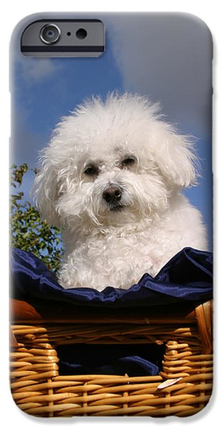 Puppies iPhone Cases - Fifi says Hi iPhone Case by Michael Ledray