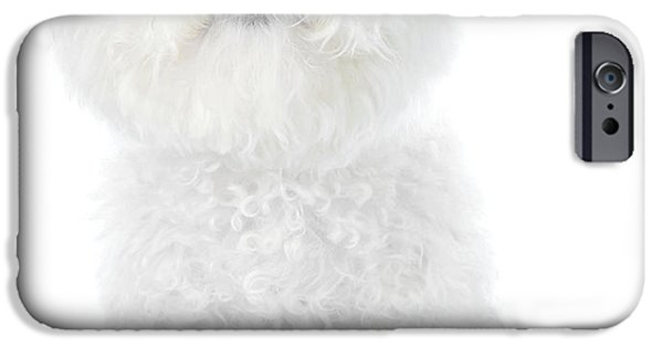 Puppy Love Greeting Cards iPhone Cases - Fifi the Bichon Frise in White On White iPhone Case by Michael Ledray