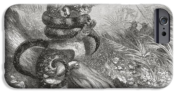 Serpent iPhone Cases - Fight Between A Jaguar And A Boa. From iPhone Case by Ken Welsh