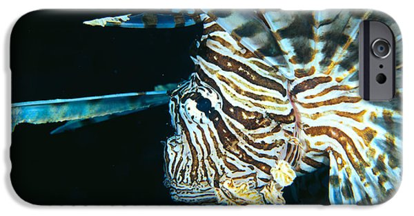 Dave iPhone Cases - Fiji, Lionfish iPhone Case by Dave Fleetham - Printscapes