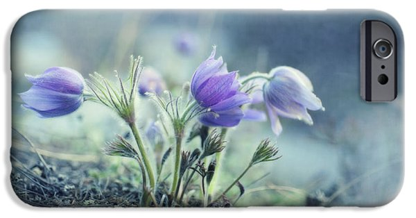 Flower Blossom iPhone Cases - Finally Spring iPhone Case by Priska Wettstein