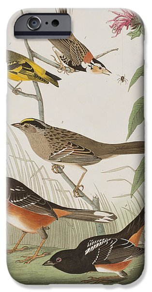 Arctic Drawings iPhone Cases - Finches iPhone Case by John James Audubon