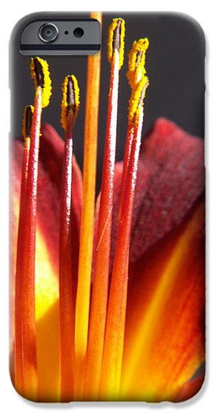 Floral Photographs iPhone Cases - Fire Lily iPhone Case by Amy Fose