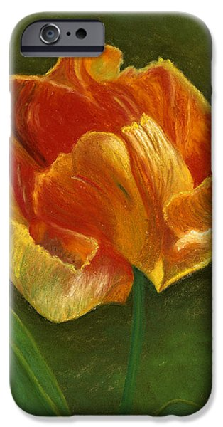 Botanical Pastels iPhone Cases - Fiery Tulip #1 iPhone Case by Ginny Neece
