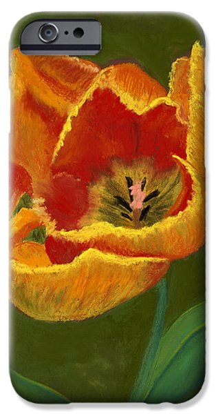 Botanical Pastels iPhone Cases - Fiery Tulip #2 iPhone Case by Ginny Neece