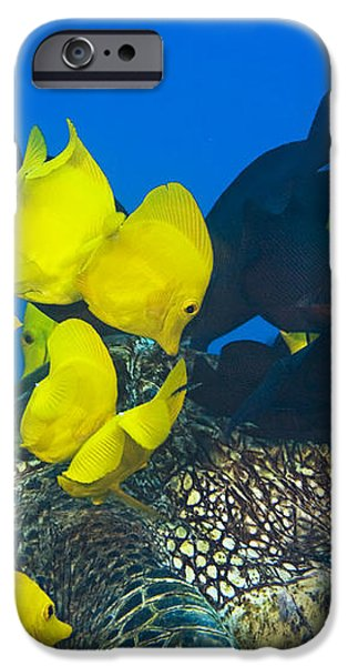 Fish cleaning turtle iPhone Case by Dave Fleetham - Printscapes