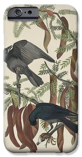 Crows Drawings iPhone Cases - Fish Crow iPhone Case by John James Audubon
