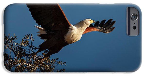 Birds iPhone Cases - Fish Eagle taking flight iPhone Case by Johan Swanepoel