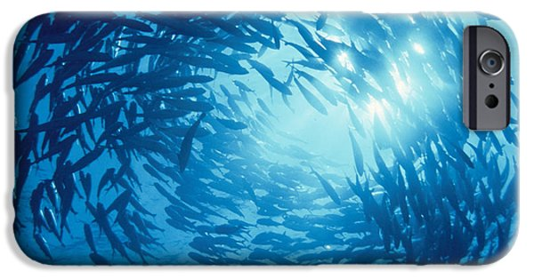 Undersea Photography iPhone Cases - Fishes Swarm Underwater iPhone Case by Panoramic Images