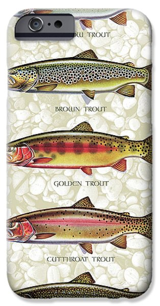 Tackle iPhone Cases - Five Trout Panel iPhone Case by JQ Licensing