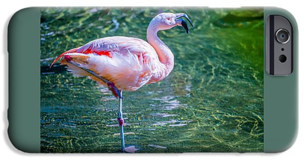 Birds iPhone Cases - Flamingo in Still Waters iPhone Case by Saundra Salter