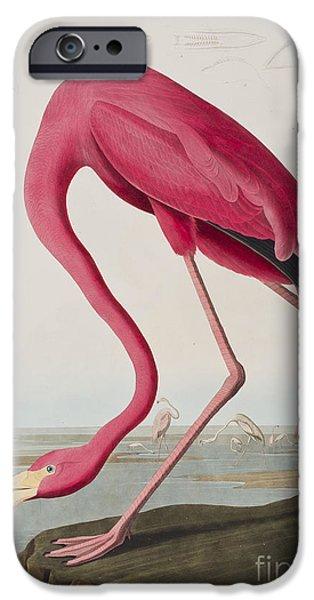Flamingoes iPhone Cases - Flamingo iPhone Case by John James Audubon