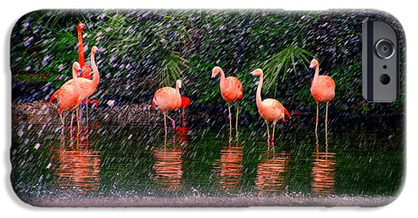 Reflections Of Nature iPhone Cases - Flamingos II iPhone Case by Susanne Van Hulst