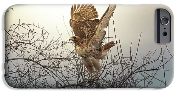 Red-tailed Hawk iPhone Cases - Flashing The Truckers iPhone Case by Robert Frederick