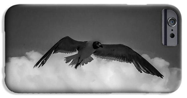 Seagull Pyrography iPhone Cases - Flight iPhone Case by John Burgess