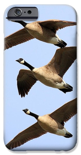 Seagull iPhone Cases - Flight of Three Geese iPhone Case by Wingsdomain Art and Photography