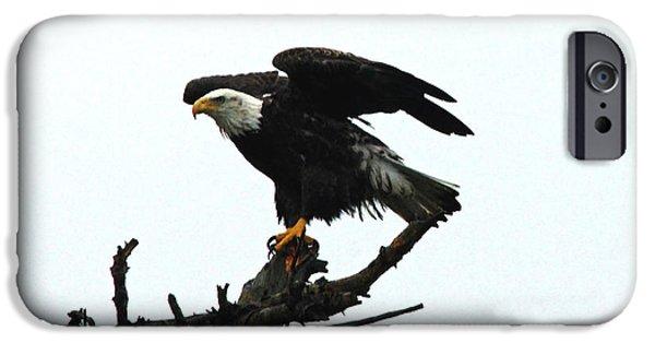 Sea Birds iPhone Cases - Flight Ready Bald Eagle iPhone Case by Debbie Oppermann