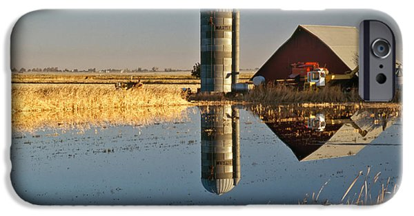 Reflection Harvest iPhone Cases - Flooded Rice Field iPhone Case by Inga Spence